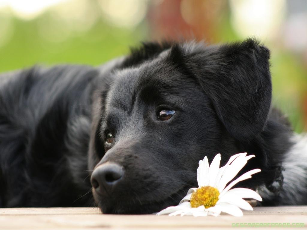 Грустный цветок картинка 3